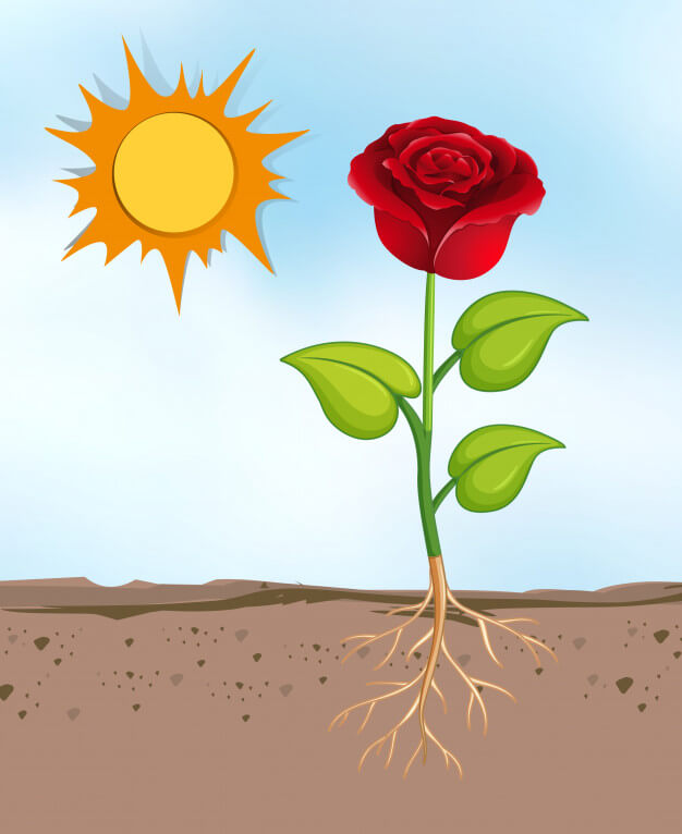 rose and cactus moral story in bengali